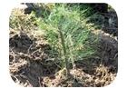 forestacion y ecologia